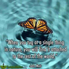 """When You Tug At a Single Thing In Nature, You Will Find It Attached to the Rest of the World"" -John Muir"