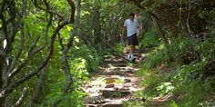 Mt. Pisgah Hike & Restaurant Blue Ridge Parkway Virginia, Mountain View, North Carolina, Hiking, Restaurant, Mountains, Plants, Walks, Diner Restaurant