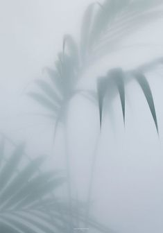 Botanic postcard with palm tree leaves photographed in the mist by Kristina Dam Studio. Wallpapers Tumblr, 3d Max Vray, Foto Poster, Poster Poster, No Rain, White Aesthetic, Arte Floral, Art Photography, Contemporary Photography