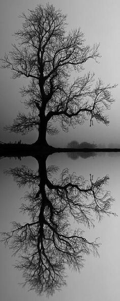 Tree black and white photography beautiful 26 trendy Ideas Landscape Photography, Nature Photography, Landscape Pics, Motion Photography, Abstract Landscape, Tree Of Life, Belle Photo, Pretty Pictures, Black And White Photography