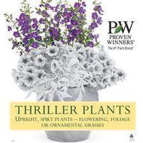 Thriller Plants are used either in the back or middle of a container. They are usually a taller plant that adds height and drama to the your container. Container Plants, Container Gardening, Potato Vines, Tall Plants, Thriller, Backyard, Outdoors, Beautiful, Ideas