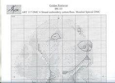 Golden Retriever 2/3