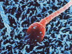 Lorsque la femme choisit Philippe Clot – Type n.7 – 2005-10-01 C'est l'ovule qui prend l'homme Le mythe du vaillant spermatozoïde vainqueur de la course effrénée à la fécond…