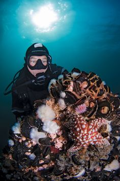 Scuba diving California's best artificial reef — Eureka oil platform — combines the rugged steel of oil rigs with an abundance of marine life.