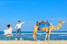 pre wedding photos with camel