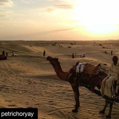 #Repost @petrichoryay with @repostapp To get featured tag your post with #talestreet He told us about his life how little he earned and how big his family was. // #rajasthan #rajasthani #oyemyclick #oyeitsindia #_oye #_soi #talestreet #igersrajasthan #jaisalmer #incredibleindia #traveldiaries #rajasthandiaries #apnorajasthan #click_india_click #india_gram #pixelpanda #bnw_india #travel #photogram #photooftheday #trellatale #desert #camel #love #eveningsky #exposure #twitter