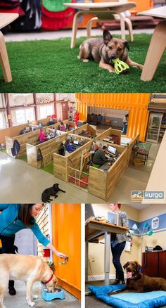 The offices of Kurgo, a Massachusetts-based startup that produces high-end canine toys and travel gear, have been transformed into a comfortable place for the staff and their dogs, incorporating pup-friendly areas right alongside human spaces.
