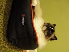 Petmate Dogzilla Rectangular Lounger Pet Bed Product Review http://www.floppycats.com/petmate-dogzilla-rectangular-lounger-pet-bed-product-review.html