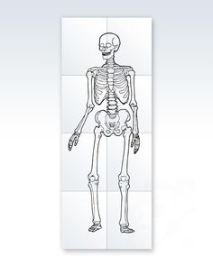 Make education fun for kids. Print out an 8-piece life-size skeleton on standard size paper.