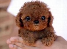 Top 10 Cutest Puppies In The World - Daily News Dig (shared via SlingPic)