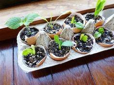 Good Creative Seed Starting Ideas