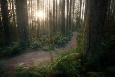 A quiet morning at Paradise Valley.  #path #sunrise #forest #trail #nature #pnw #pnwcollective #pacificnw #wa #washington #pnwonderland #thatpnwlife #upperleftusa #pnwwonderland #pacificnorthwest #komoLOZ #wildlycreative #ourpnw