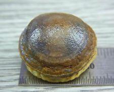 4614 Bonsai Suiseki-Natural Gobi Agate Eye Stone-Rare Amazing Viewing L=23mm