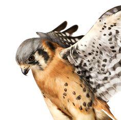 Andrew Zuckerman's www.birdbook.org