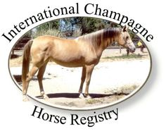 Champagne Horse Color - International Champagne Horse Registry - Information about and Registering Champagne color horses. Breeding for and buying or selling horses with this dilution gene. Education of the public and the equine world about champagne.