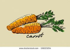 hand drawn fresh color carrot on beige