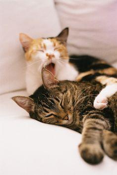 Soft kitty, warm kitty, little ball of fur.  Happy kitty, sleepy kitty, purr purr purr. <3