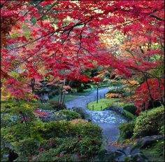 Garden Splendor - Seattle, Washington