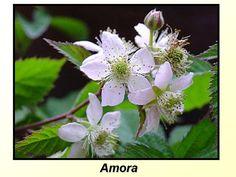 Vooê conhece a flor desta fruta?