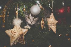 Dorian the cat in the Christmas tree