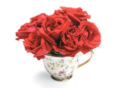 Red roses in a teacup