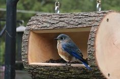 Jim DIY Bird Feeder Plans (Homemade Log Birdfeeder) How the Mortgage Landscape Has Changed There use Rustic Bird Feeders, Wood Bird Feeder, Bird Feeder Plans, Bird House Feeder, Hanging Bird Feeders, Homemade Bird Houses, Homemade Bird Feeders, Bird Houses Diy, Bird House Plans