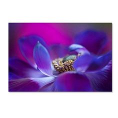 Trademark Fine Art 'Windflower' Canvas Art by Jacky Parker, Size: 30 x 47, Purple