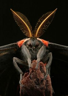 Macro Photos - Creepy and Cool Alien Looking Bugs Weird Insects, Cool Insects, Bugs And Insects, Beautiful Bugs, Animals Beautiful, Beautiful Creatures, Macro Photography, Animal Photography, Levitation Photography
