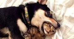 Σκύλος και γάτα. Φωτογραφίες μεγάλου έρωτα [photos]