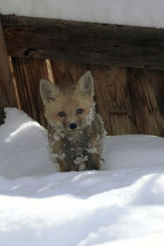 Baby Fox! I'm so happy!