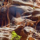 Submitted by  on Reddit. Perseverance. Zion National Park UT [1293x2000] [OC]