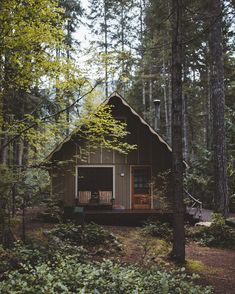 little forest cabin