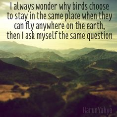 I always wonder why birds choose to stay in the same place when they can fly anywhere on earth, then I ask myself the same question #travelquotes travel quote inspiration mountains landscape morocco