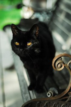 A black cat is definitely a must for my future These cats are not evil and they are lucky. A cat is a cat. Each with a unique personality. Incensewoman