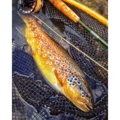 Fishing Photography, Fly Fishing, Outdoors, Food, Women, Fishing, Trout, Pisces, Essen