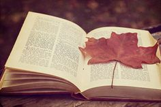 Fall means cuddling up with a good book, a warm blanket, and a cup of coffee
