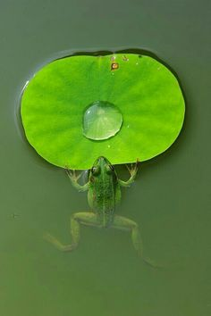 """Hey, Bubble! This is MY favorite lily pad. You have to get off and go somewhere else."" ~ the Frog"