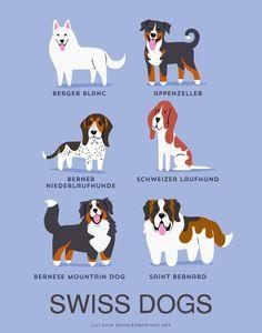 Swiss Dogs: Berger Blanc Shepherd, Appenzeller, Berner Niederlaufhunder (Small Bernese Hound), Schweizer Laufhund, Bernese Mountain Dog, Saint Bernard.