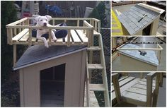 Build-A-Dog-House-With-A-Top-Deck.jpg 550×358 пикс