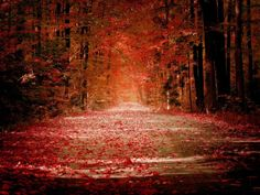 autumn road by andy morley on 500px