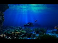 Study Reveals First Microbial Life Buried Deep Beneath Ocean Floor Under The Water, Life Under The Sea, Betta, Aquarium Backgrounds, Sink Or Swim, Sailing Trips, Helicopter Tour, Water Transfer, Shore Excursions