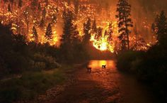 Elk Bath by photographer John McColgan, is also known as the Bitterroot Forest Fire. This took place in the Bitterroot National Forest, Montana, August, It was one of Time magazine's Photos of the Year Esben And The Witch, Gatlinburg Fire, Gatlinburg Tennessee, Gatlinburg Wildfire, Oracion A San Antonio, Tennessee Fire, East Tennessee, California Wildfires, Wild Fire
