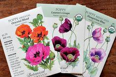 How to Grow Poppy Flowers {Start to Finish}