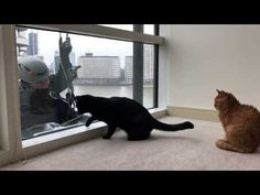 These #Cats Have An Exceptional Bond With The Window Cleaner