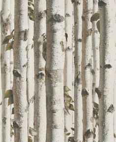 Woods (J21517) - Brewers Wallpapers - A digital print image of birch trees in natural green and beige colouring. Please request a sample for true colour match. Paste-the-wall product.