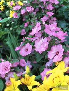 Give your flower garden a layered look by planting tall, vertical species in the back-of-the border. They act as a colorful focal point to draw the eye and give the garden visual balance. In this border, pink mallow, which can grow 4 feet tall, teams with 3-foot-tall yellow Asiatic lilies to provide a spectacular backdrop of bloom. Other tall perennials include garden phlox, heliopsis, Oriental lilies, delphinium, allium, and lupine.
