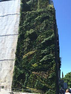 Giardino verticale a Madrid