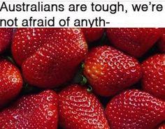 funny quotes - 100 Of The Best Australian Memes Of 2018 Australian Memes, Aussie Memes, Old Memes, Dankest Memes, Australia Funny, Aussie Australia, Meanwhile In Australia, Funny Jokes, Hilarious