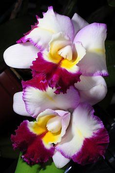 Blc Tsutung Beauty | Flickr - © Nurelias