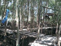 JOGMAG: Jembatan Api Api Objek Wisata Hutan Mangrove Kulon... Yogyakarta, Trunks, Drift Wood